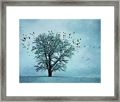 Winter Blues Framed Print