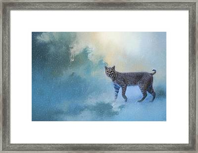 Winter Bobcat Framed Print by Jai Johnson