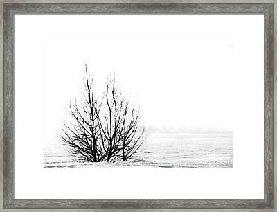 Winter Bones Framed Print