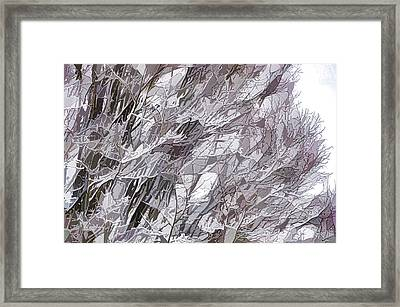Winter Branches 1 Framed Print by Lanjee Chee