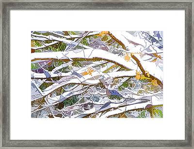 Winter Branches 3 Framed Print by Lanjee Chee
