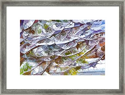 Winter Branches Of Trees In Snow Framed Print