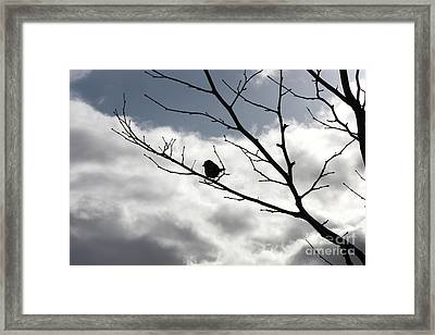 Winter Branches With Bird Framed Print