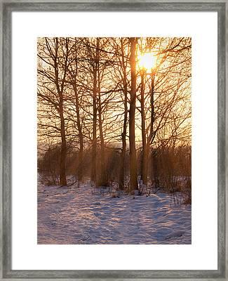 Winter Break Framed Print by Wim Lanclus