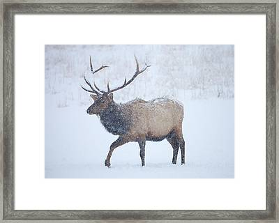 Winter Bull Framed Print by Mike  Dawson