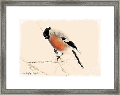 Winter Bullfinch Framed Print
