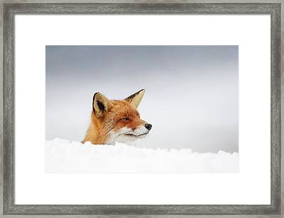 Winter Came - Red Fox In The Snow Framed Print by Roeselien Raimond