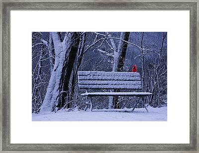 Winter Cardinal Framed Print by Ron Jones