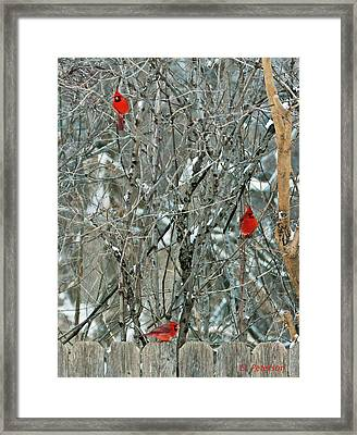 Winter Cardinals Framed Print by Edward Peterson