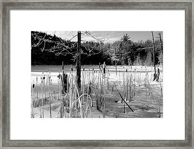 Winter Cattails Framed Print