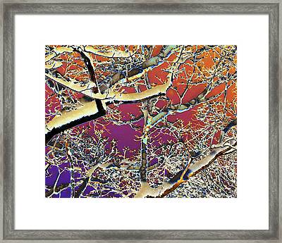 Winter Celebration Framed Print