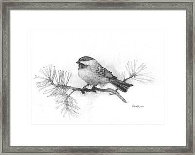 Winter Chickadee Framed Print by Cynthia  Lanka