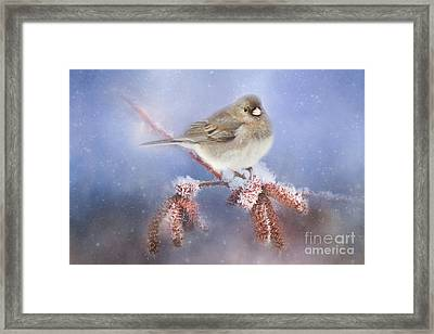 Winter Chill Framed Print by Darren Fisher