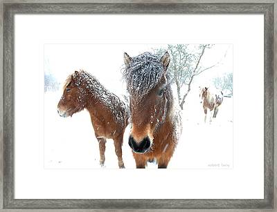 Winter Chills Framed Print