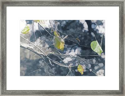 Winter Collage Framed Print