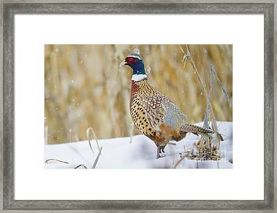 Winter Color Framed Print