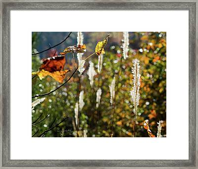 Framed Print featuring the photograph Winter Color by George Randy Bass