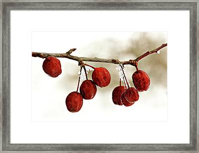 Winter Color Framed Print by Nikolyn McDonald