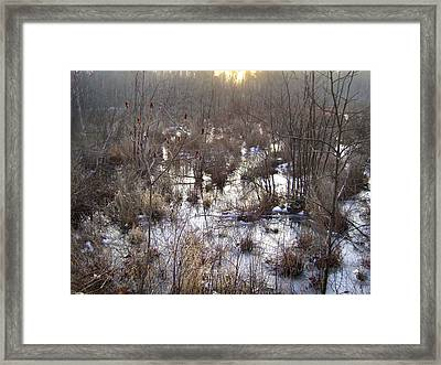 Winter Color Of A Wetland Framed Print