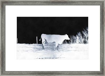Winter Cow - Cow Framed Print