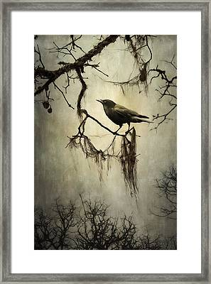 Winter Crow Framed Print