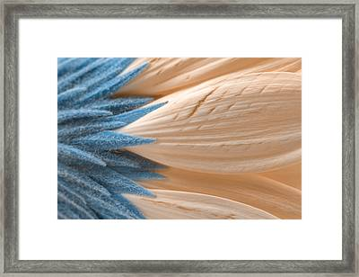 Winter Daisy Macro Framed Print