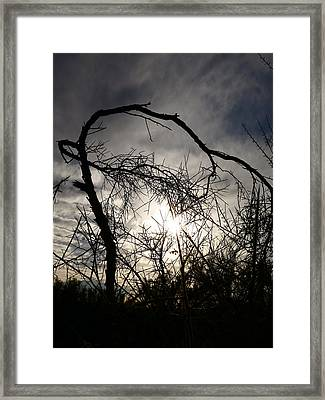 Winter Dance Framed Print by Bonnie See