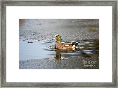 Winter Dip Framed Print