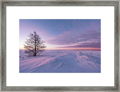 Winter Dreams Framed Print