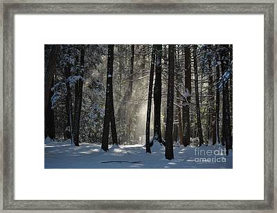 Winter Falling Snow At Bigelow Hollow State Park  Framed Print