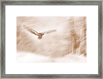 Winter Feathers Framed Print