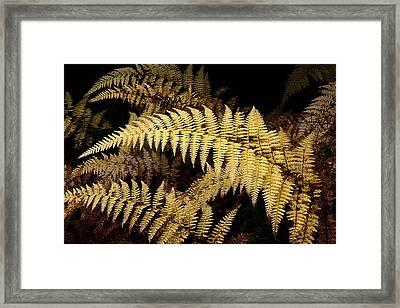 Framed Print featuring the photograph Winter Fern by Ken Barrett