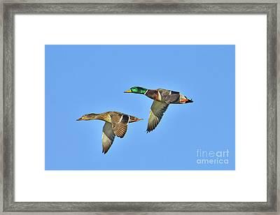 Winter Flight Framed Print by Gary Walker