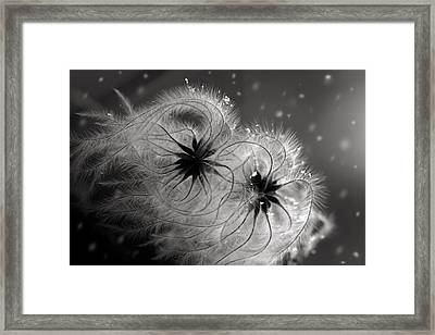 Winter Flower  Framed Print by Floriana Barbu