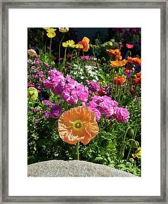 Winter Flowers Framed Print by Gwyn Newcombe
