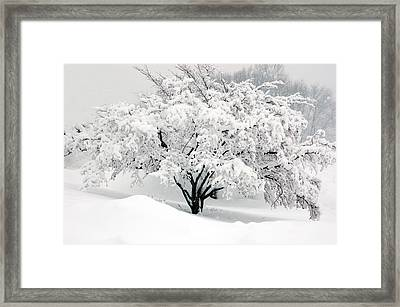 Winter Fluff Framed Print