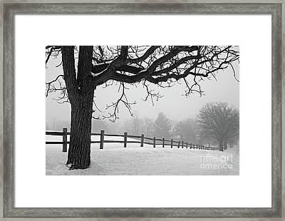 Winter Fog Framed Print