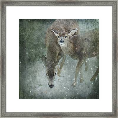 Framed Print featuring the photograph Winter Foraging by Sally Banfill