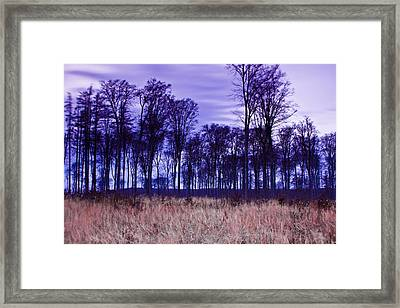 Winter Forest At Sunset In Hungary Framed Print by Gabor Pozsgai