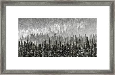 Winter Forest Framed Print by Brad Allen Fine Art