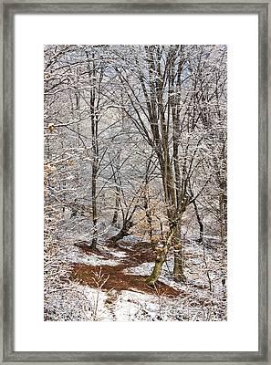 Winter Forest Framed Print by Gabriela Insuratelu