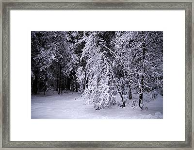 Winter Forest Framed Print by Lee Chon