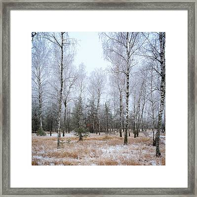Winter Forest. Shchymel, 2014. Framed Print