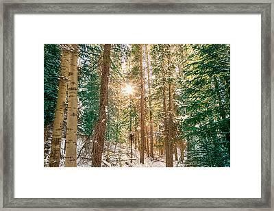 Winter Forest Sunshine Framed Print by James BO Insogna