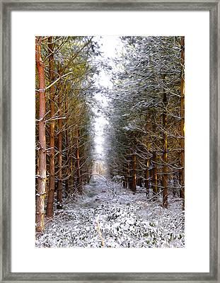 Winter Forest Framed Print by Svetlana Sewell