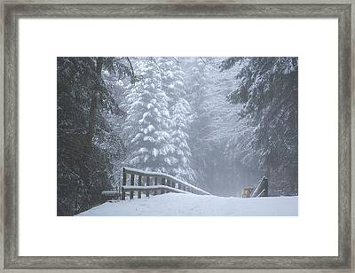 Winter Forest With Golden Retriever Framed Print