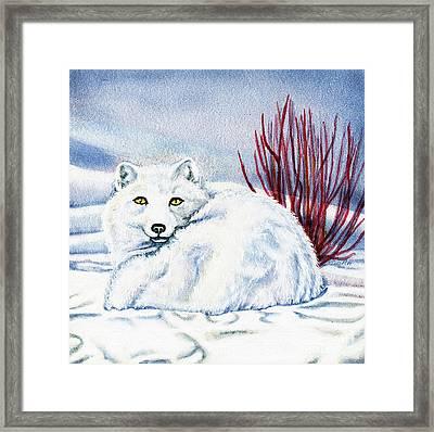 Winter Fox Framed Print by Antony Galbraith