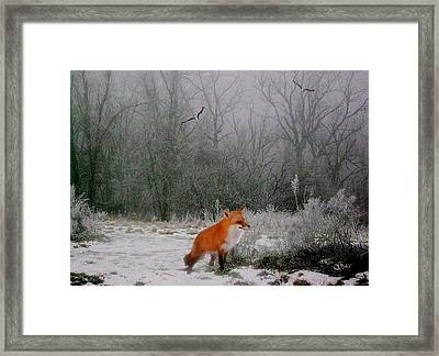 Winter Fox Framed Print by Julie Grace