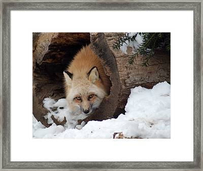 Framed Print featuring the photograph Winter Fox by Richard Bryce and Family