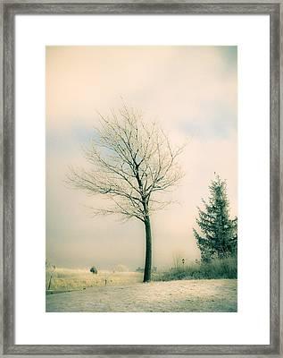 Winter Freeze Framed Print by Julie Palencia